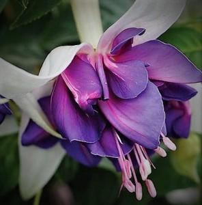 Marbeller Purple Rain