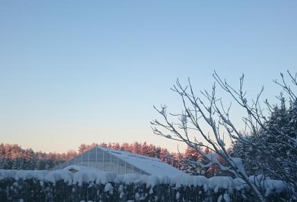 Vinter drivhus redigert_0167